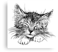 Cat animal Canvas Print
