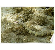 Pipefish Poster