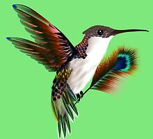 colibri & feather by MrNicekat