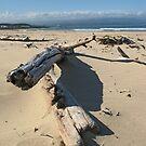Driftwood by Jeanne Horak-Druiff