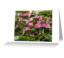 Abundant bunch of pink waterlilly flowers and leaves. Greeting Card