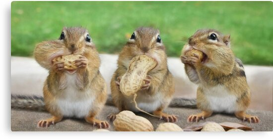 """Say """"Cheese"""" (or Peanuts) by Lori Deiter"""
