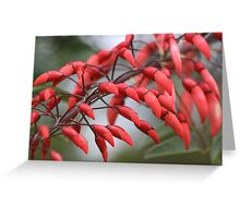 Red teardrops Greeting Card