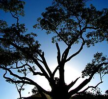 Tree Silhouette at Sunset by Kathie Nichols