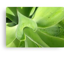 agave > eco green Canvas Print