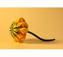 Graceful Gourd Photographic Print