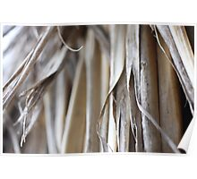 Thatch Roof Macro Poster