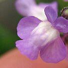 Weed Flower by Heavenandus777