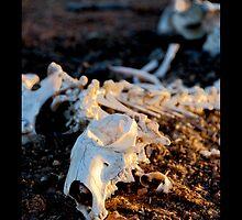 Ningaloo bones by Richard Barry