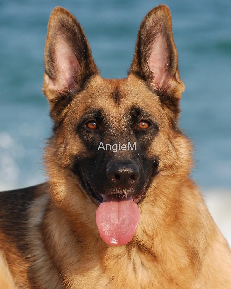 Happy Dog by AngieM