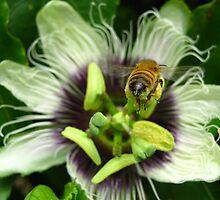 I'll Bee Back... by Vanessa Barklay