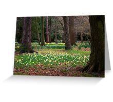 A Walk in the Woods - Spring Daffodils Greeting Card