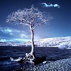 Loch Lomond Tree Monster by Ward McNeill