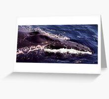 Humpback Greeting Card