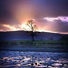 Pastel Tree by Ward McNeill