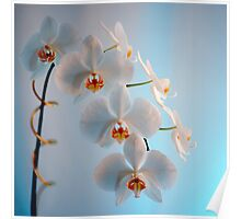 Orchid Branch Poster