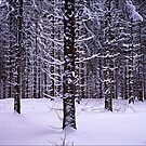Black Forest Winter by Jrg Holtermann