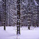 Black Forest Winter by Jörg Holtermann