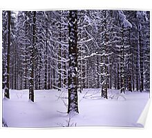 Black Forest Winter Poster