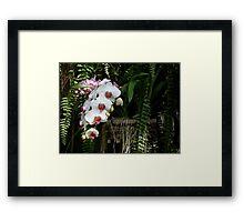 Orchid Garden Framed Print