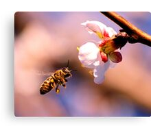 Bee on The Hunt Canvas Print