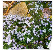 Spring Purple flowers, floral art, impressionism Poster