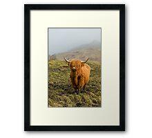 Highland Coo on a misty hillside. Framed Print