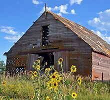Abandoned Barn with Sunflowers  by Leona Bessey