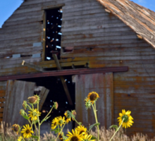 Abandoned Barn with Sunflowers  Sticker