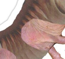 David Cameron, Mole Rat Sticker