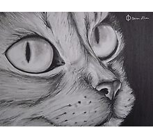 Graphite Cat Photographic Print
