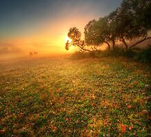 Misty dawn, Gawler Ranges by Kevin McGennan