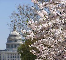 Government in Bloom by Megan Evorik