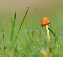 Another Dewy Mushroom by relayer51