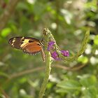 Sipping Nectar by Megan Evorik