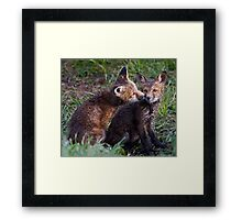 Fox Kits Drenched and Nuzzling Framed Print