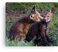 Fox Kits Drenched and Nuzzling Canvas Print