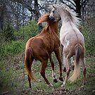 Wild Horses by Sharon Morris
