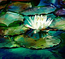 White Water Lily Impression by Darlene Lankford Honeycutt