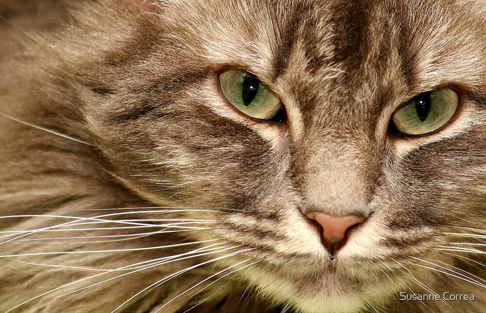 green eyes by Susanne Correa