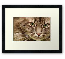 green eyes Framed Print