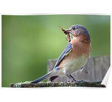 Mother Bluebird, Huntress, Protector, Provider Poster