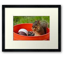 I found the seed!!! Framed Print