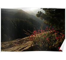 Moro Rock Flower View Poster