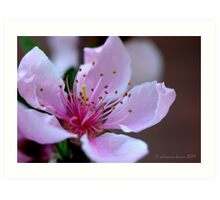 Springtide Art Print
