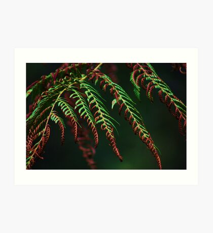 Singed Ferns Art Print