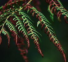 Singed Ferns by jweeks