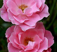 Pinky Petals by Susan van Zyl