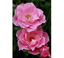 Pinky Petals Photographic Print