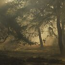 Mysterious morning mist in the forest by jchanders